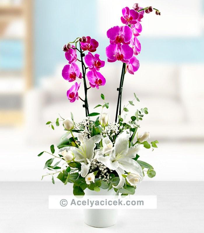 Çift Dallı Orkide Mutluğu