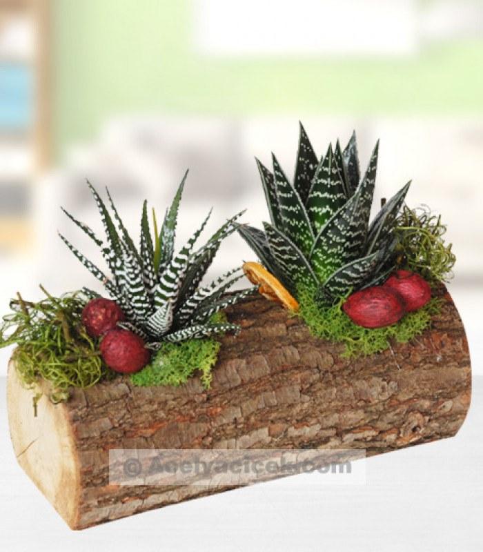 Doğal Bitkiler