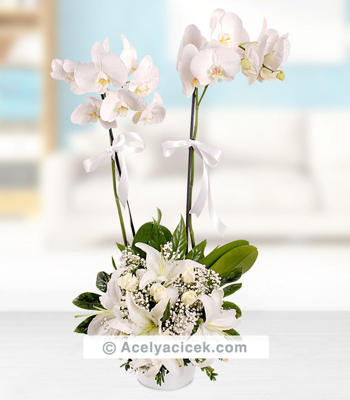 2 Dallı Orkide Beyaz Aranjman