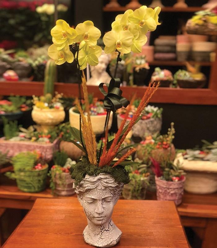 phalaenopsis Yeşil Orkide