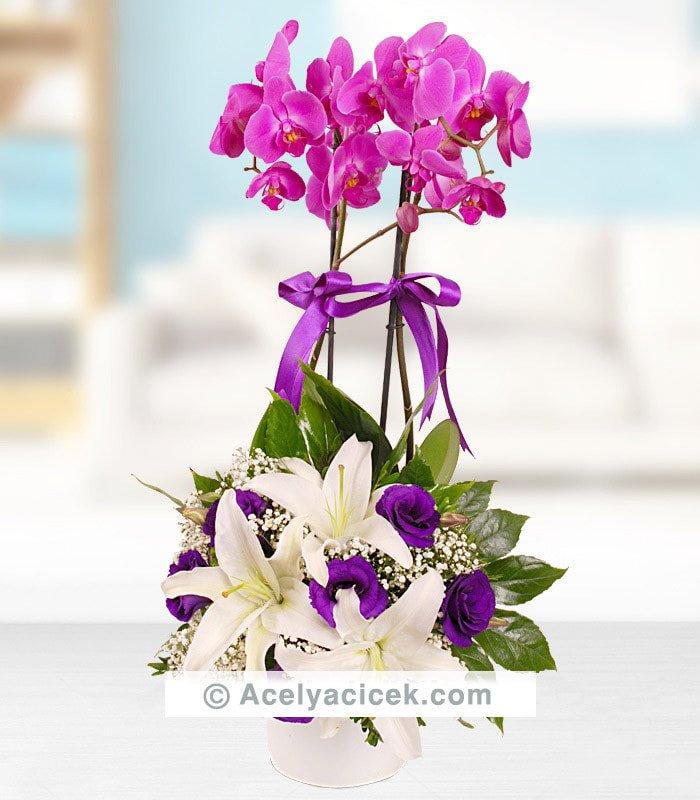 Orkideli Mor Beyaz Aranjman