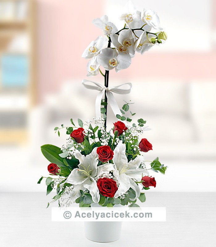 Orkide Kırmızı Güller serpmesi
