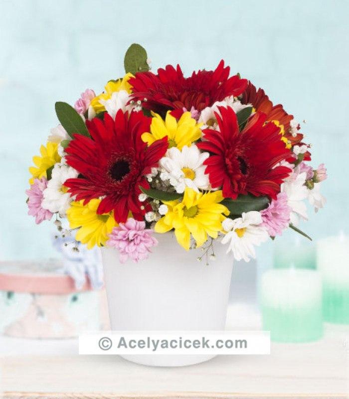 Kır Çiçeği Gerbera Bütünlüğü