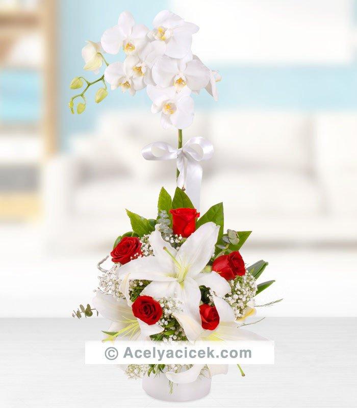 Beyaz Orkide Kırmızı Aranjman