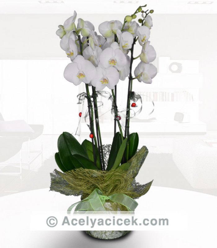 4 Dal Orkide Bahçesi