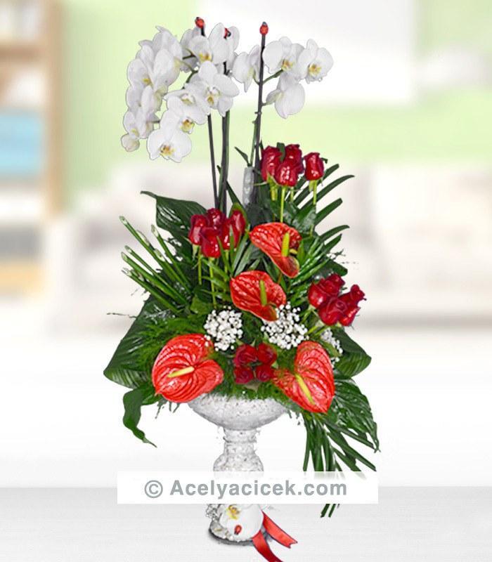 Orkide Antoryum Bütünlüğü