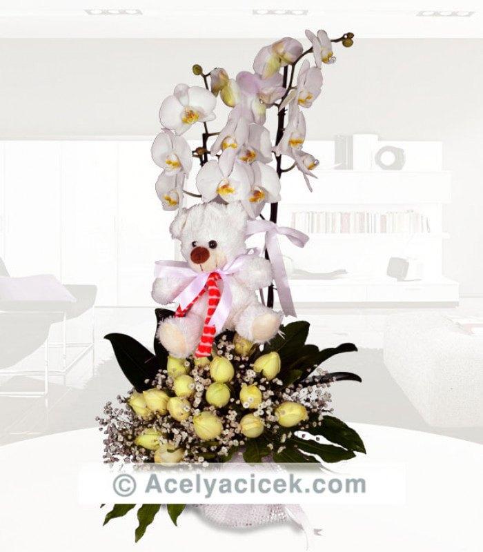 Orkideli Gül Diyarı